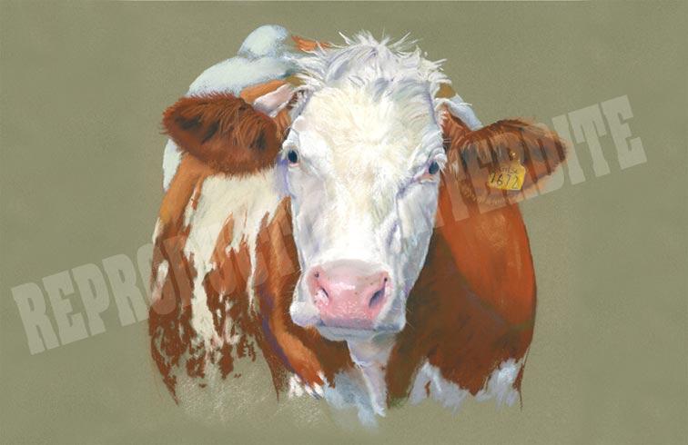 Vache (c) Gisle