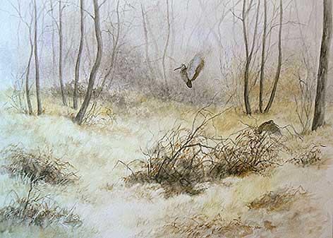 'Becasse de novembre' (c) Walter Arlaud
