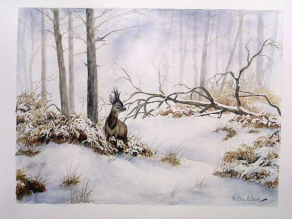 'Brocard dans la neige' (c) Walter Arlaud