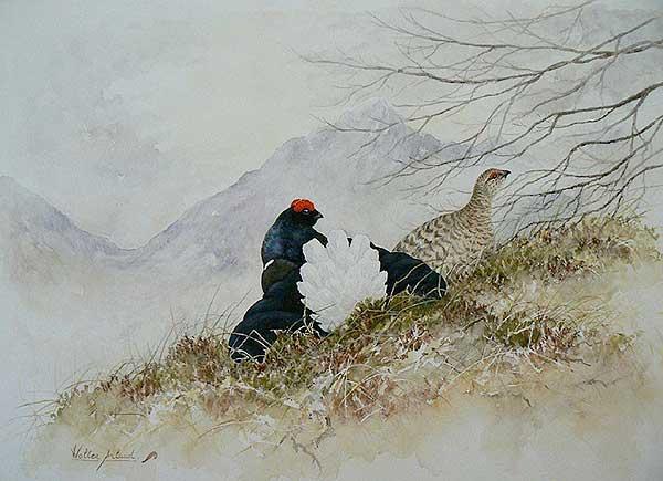 'Couple de tetras lyres' (c) Walter Arlaud