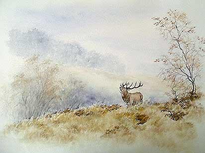 'Le brame du cerf' (c) Walter Arlaud