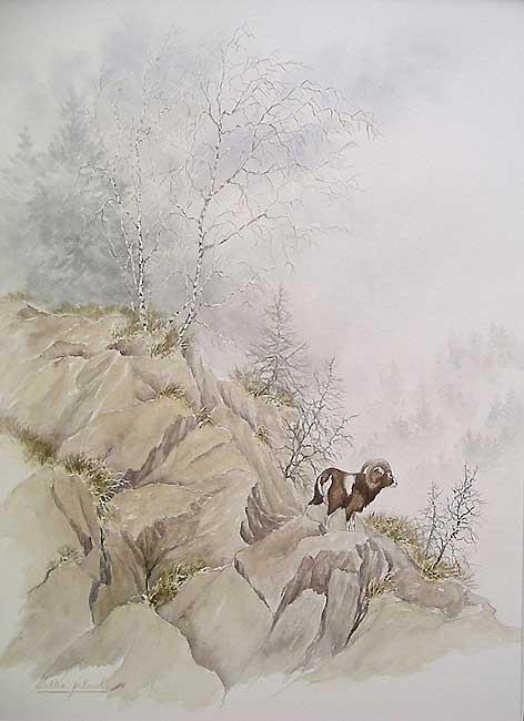 'Le mouflon' (c) Walter Arlaud