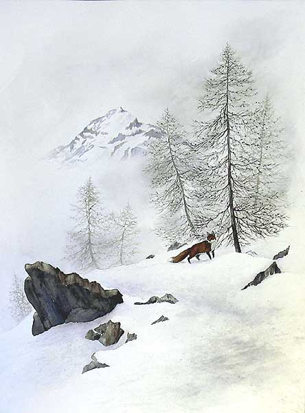 'Renard en montagne' (c) Walter Arlaud